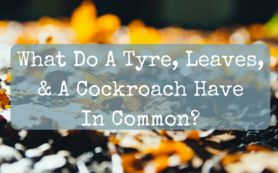 What Do A Tyre, Leaves, & A Cockroach Have In Common?